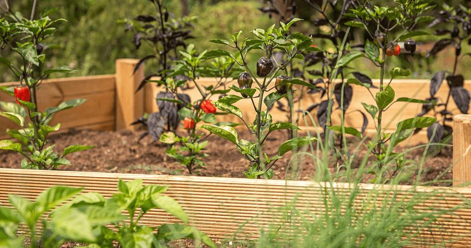 Bei der Gartenarbeit kann man vor allem auch auf ein Beet setzen