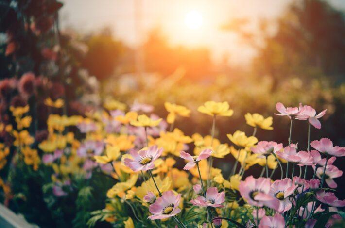 Sonne scheint in den Garten