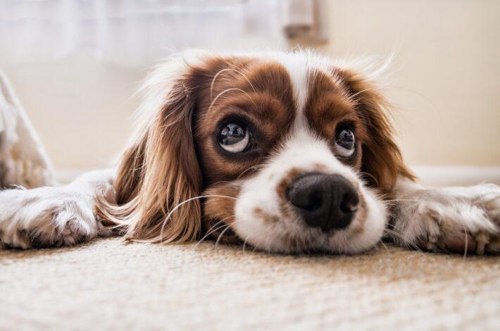 Süßer Hund auf dem Boden