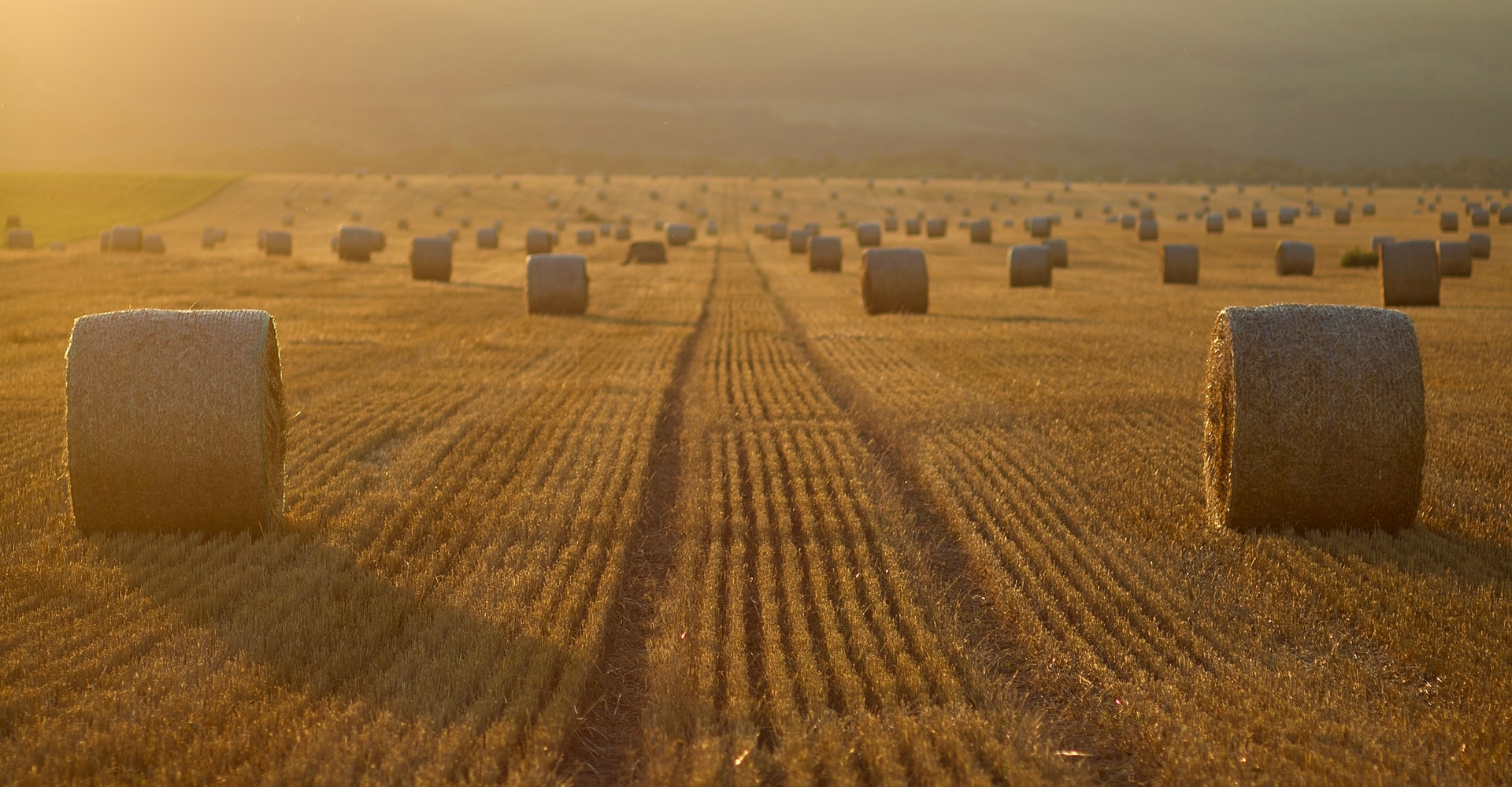 Rundballen auf einem Feld